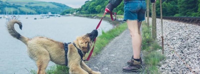 Os problemas que podem acontecer quando o dono for passear com cachorro