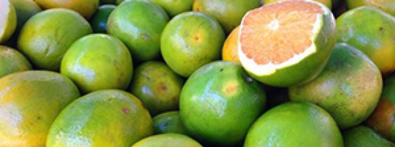 Laranja é uma fruta imprescindível para a humanidade e já salvou muitas vidas