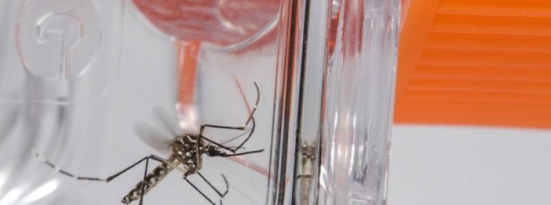 Cuidados com o Aedes devem seguir no Carnaval