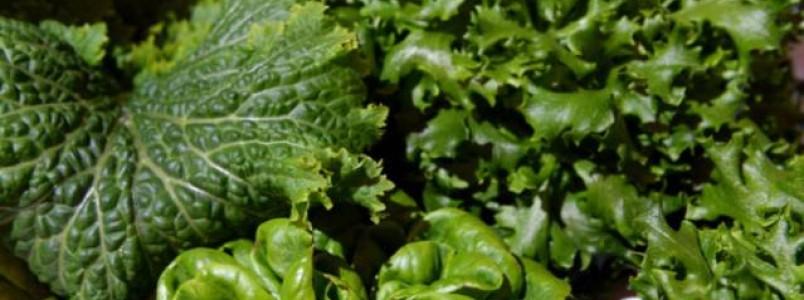 7 folhas verdes ricas em fibras para desinchar e limpar o fígado