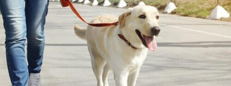 Caminhar e correr com o cachorro faz bem?