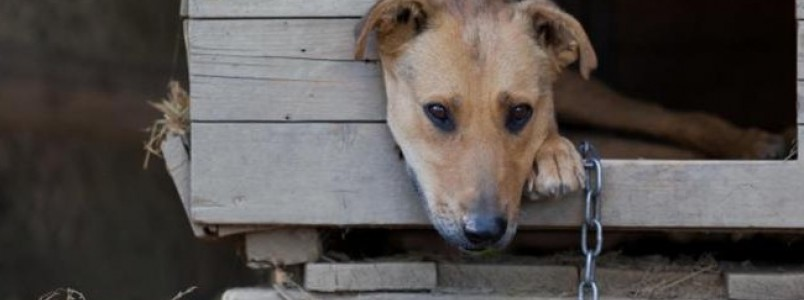Cachorro na corrente: Covardia sem limites