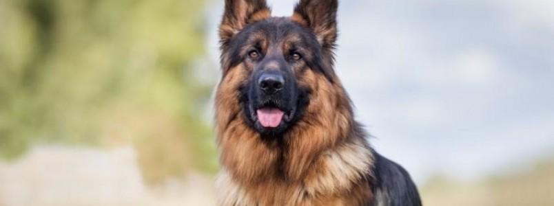É neste domingo em Itabira: Encontro de Cães e Criadores