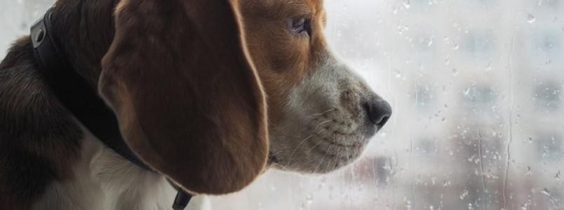 Veterinária lista cuidados com os pets durante as chuvas