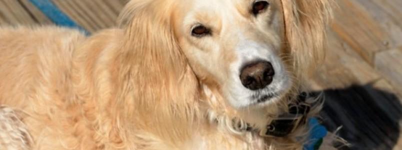 10 motivos para adoção de cachorros