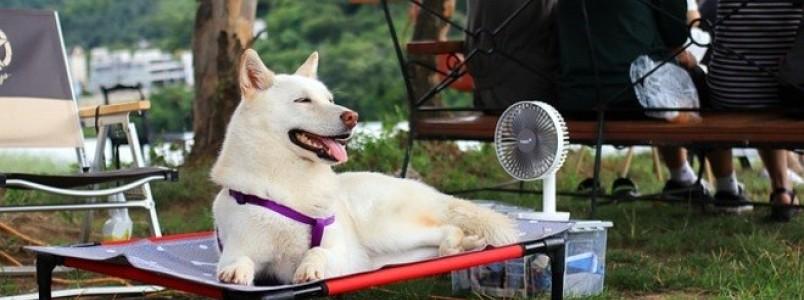 Saiba como ajudar seu cachorro a enfrentar as altas temperaturas