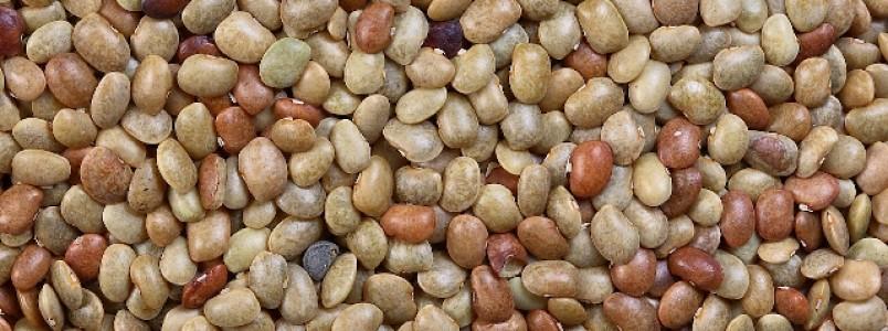 Trate a pressão alta com grãos de horse-gram