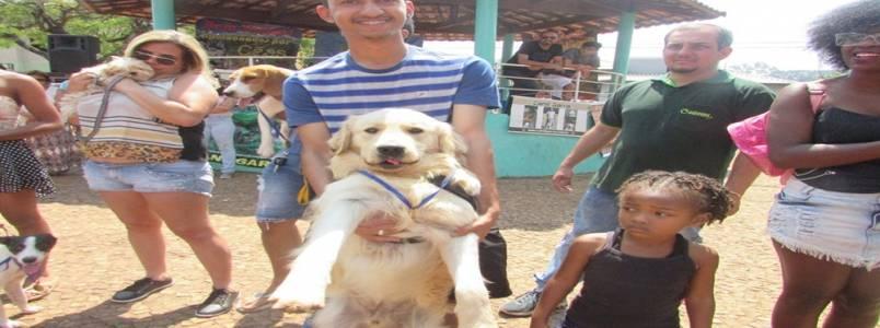 10º Encontro de Cães e Criadores de Itabira, MG, levam apaixonados por animais à praça