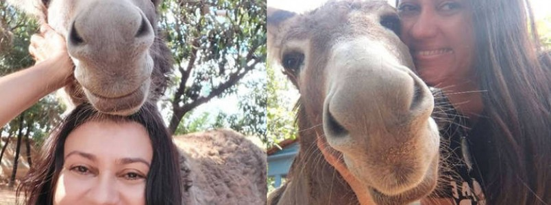 Conheça Django, o jumento sorridente mais amado da web