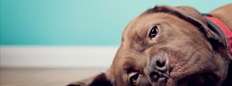 Gripe canina e a mudança de clima: uma realidade que não dá pra evitar