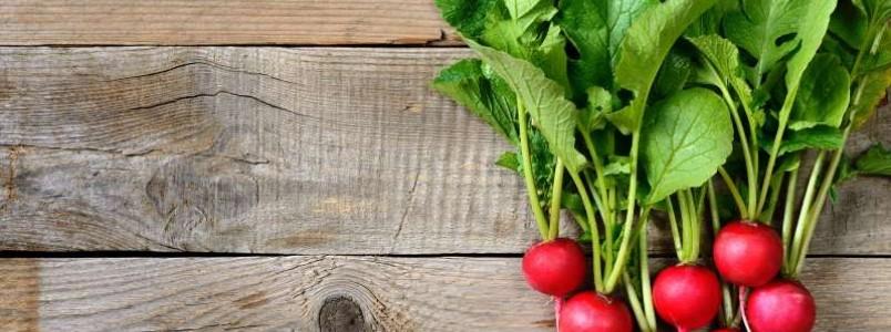 """Além de ajudar na digestão, rabanete pode ser útil para """"limpar"""" o sangue"""