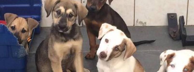 Projeto promove feira de adoção de cães e gatos no Itaim Bibi