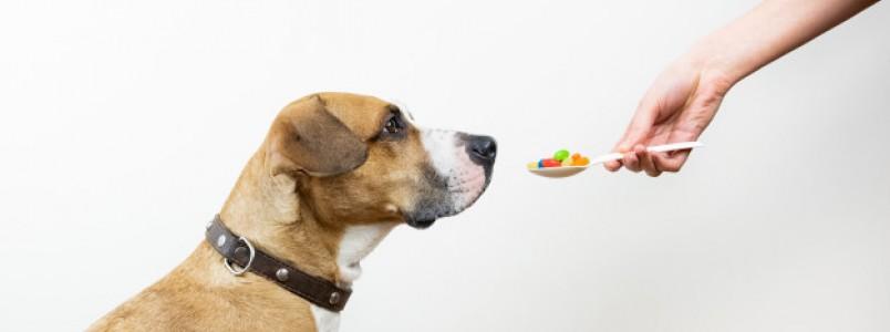 Os perigos da automedicação para cães e gatos