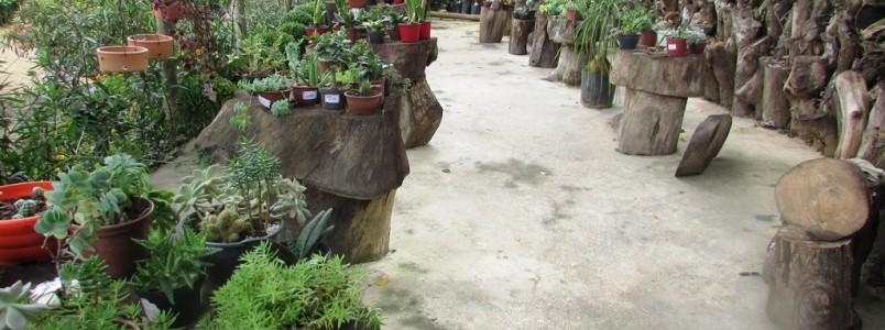 Floricultura Jardins da Água Santa: Deixe sua casa ainda mais linda