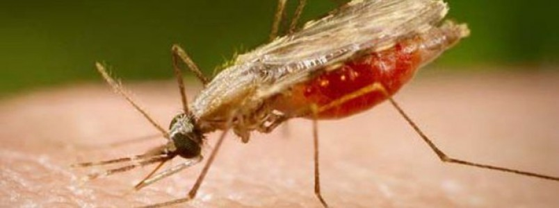 Pesquisa indica possibilidade de barrar transmissão da malária no país