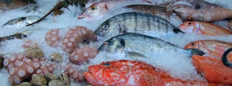 7 cuidados na compra de peixes para a Semana Santa