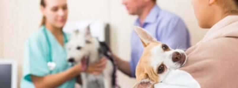 Emergências veterinárias em período de quarentena