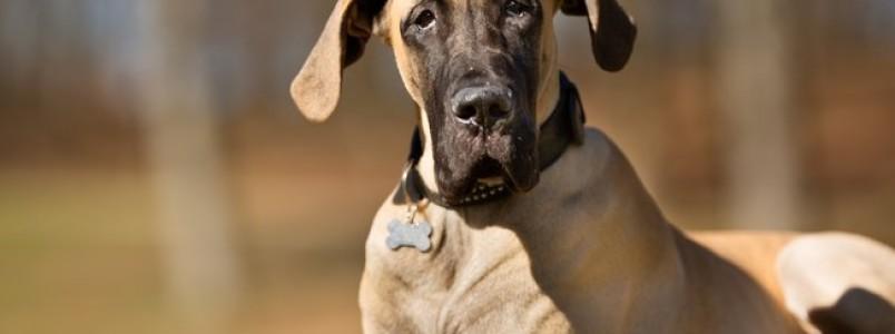 Você conhece a Síndrome de Wobbler? Veja como ela afeta seu cão